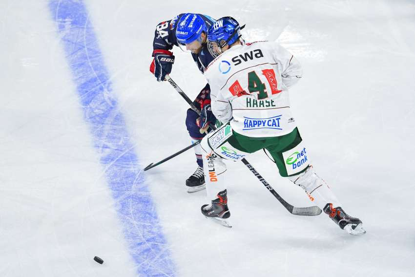 Adler Mannheim - Augsburger Panther (picture alliance/Uwe Anspach/dpa)